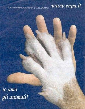 Images: enpazampa.jpg